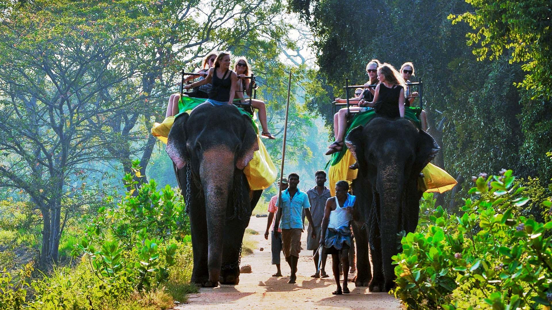 Elephant Riding Sri Lanka